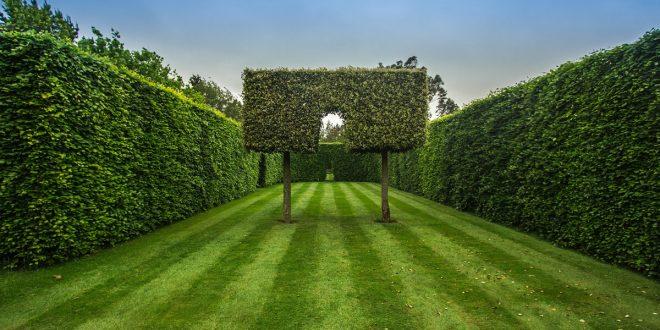 Przycinanie roślin w ogrodzie – kiedy, czym i jak prawidłowo przycinać rośliny